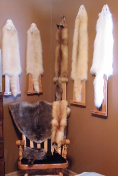 Display Stretchers - Coon - Fox
